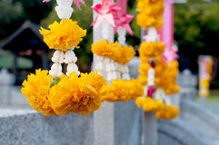 Ringblomma Garland From Thailand Arkivfoton