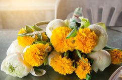 Ringblomma och Lotus Flower för att be i templet, Thailand, ringblomma, lotusblomma arkivfoton