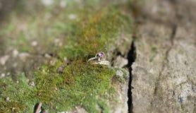 Ringe auf dem Moos Stockfotografie