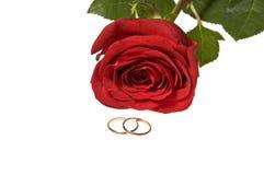 Ringe der goldenen Hochzeit und stiegen Stockfotografie