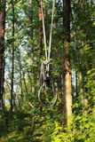 Ringe, die von einem Baum im Wald hängen, um Knechtschaft und shibari in der Natur zu üben Konzept von BDSM Reportageübersicht lizenzfreie stockfotografie
