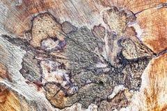 Ringe eines Baums in einem Schnitt Stockfotografie