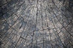 Ringe im alten getrockneten Baumstumpf Stockfoto