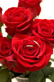 Ringe innerhalb roter Rose Lizenzfreie Stockfotos