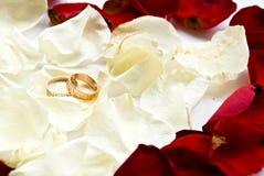 Ringe und Blumenblätter Lizenzfreies Stockbild