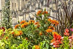Ringelblume in Bourges lizenzfreie stockbilder