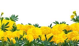 Ringelblume oder Calendula blüht mit grünem Blattblumenstrauß Stockbilder