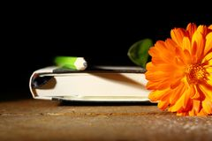 Ringelblume und Notizblock Stockfotos