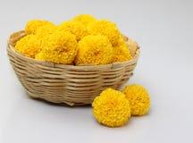 Ringelblumeblume Stockbilder