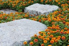 Ringelblumegelb und Felsenhintergrund. Lizenzfreie Stockfotos