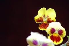 Ringelblumen, die im Sommerzeitsonnenschein bl?hen stockbilder