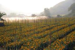 / Ringelblumen gepflanzt im Haus oder im Zaun Das Leben ist zu blühen heiliges bestimmtes Moderne Farbe mögen Goldfunkelndes gelb Lizenzfreies Stockbild