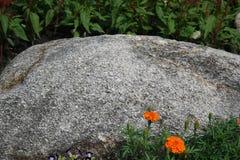 Ringelblumenblume mit Stein lizenzfreie stockfotografie