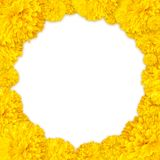 Ringelblumenblumenstapel als Rahmenhintergrund Stockbild