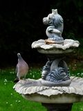 Ringeltaube betrachtet Vogelfutter auf Garteneigenschaft lizenzfreie stockfotos