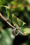Ringen bij tak Royalty-vrije Stock Fotografie