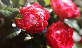 Ringen in bloemen Stock Foto's
