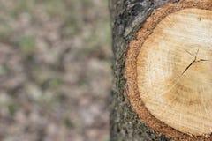 Ringen op een boomclose-up royalty-vrije stock fotografie