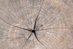 Ringen op lang Stock Foto