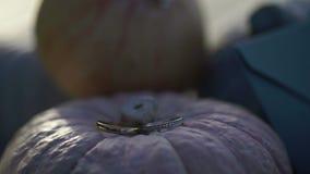 Ringen op pompoenen stock video