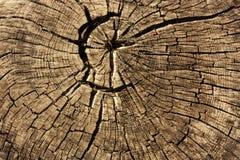 Ringen in oude droge boomstomp Royalty-vrije Stock Foto