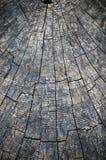 Ringen in oude droge boomstomp Royalty-vrije Stock Afbeeldingen
