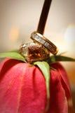 Ringen van de bruid en van Bruidegoms op rood namen niet-traditioneel toe Stock Fotografie