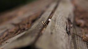 Ringen van het Bruid en Bruidegomlogboek van Are Lying On stock videobeelden