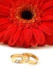 ringer bröllop Fotografering för Bildbyråer