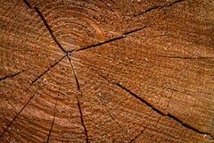 ringer treen Fotografering för Bildbyråer