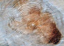 ringer treestamår Arkivbild