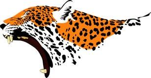 Ringhio Jaguar Fotografia Stock Libera da Diritti