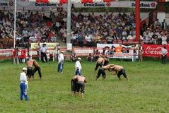 Ringkämpfer compet im Stadion Lizenzfreies Stockbild