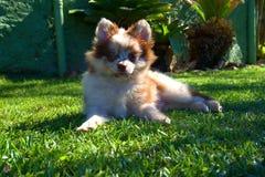 Ringo el perro fotos de archivo libres de regalías