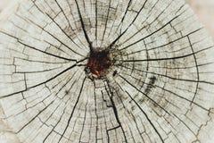 Ringowy drzewo Zdjęcia Stock