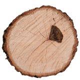 Ringowy drzewo Fotografia Stock