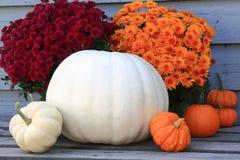 Ringraziamento, autunno di caduta, simboli del raccolto Fotografia Stock Libera da Diritti