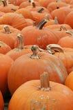 Ringraziamento di Halloween della zucca Fotografia Stock Libera da Diritti
