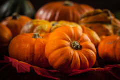 Ringraziamento e Halloween Fotografie Stock