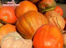Ringraziamento felice Grandi zucche arancio per il ringraziamento Immagine Stock
