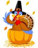 Ringraziamento Turchia nella zucca illustrazione vettoriale