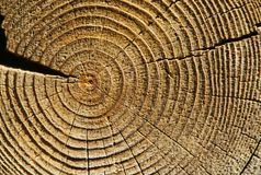 Rings of age. On a cut of a tree stock photography