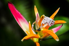 Rings. Beautiful diamond and platinum wedding rings placed on a flower Stock Photos