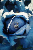 Rings on blue cabbage Royalty Free Stock Images
