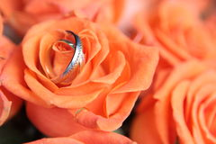 Rings on bouquet. Beautiful rings on natural flower Royalty Free Stock Images