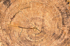 Rings of a  cut tree Stock Photography