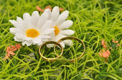 Rings and daisies Royalty Free Stock Photo