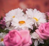 Rings on daisy Stock Photos