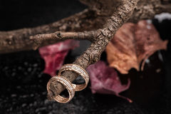 Rings On A Dry Autumn Branch Stock Photos