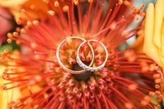 Rings on flower  Stock Image
